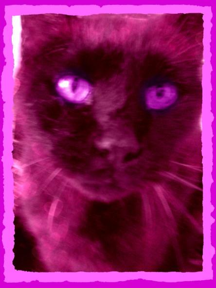 0623 pink c